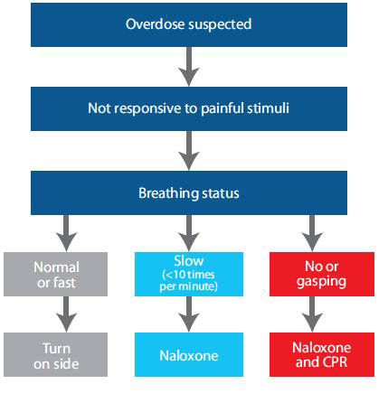 Model guideline for non-EMS professionals for suspected narcotic/opiate overdose assessment and care